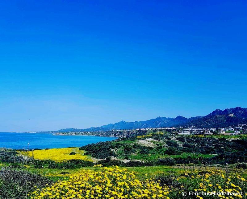Utsikt langs fjellene ved Esentepe og Bahceli østenfor Kyrenia ned mot turkist hav med grønne jorder og gule markblomster.